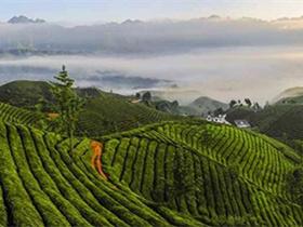 现代茶诗《鹧鸪天·武夷大红袍》赏析_描写武夷岩茶大红袍的古诗_关于茶的诗句