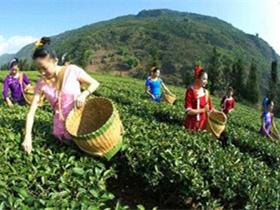 描写采摘凤凰单丛春茶的古诗《咏春》注释赏析_凤凰单丛的茶诗妙句