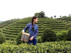 唯美经典茶诗歌《敬茶歌》译文赏析_关于描写敬茶喝茶的诗句古诗