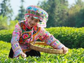 描写普洱古树茶的诗句《普洱茶》赏析_关于普洱古树茶的唯美茶诗