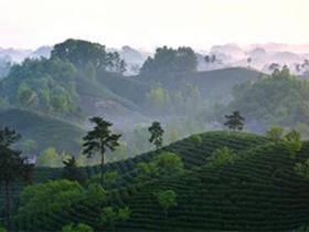 潮州工夫茶凤凰单丛的茶诗《凤凰茶》注释赏析_描写茶园风景的诗句