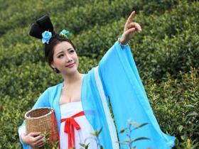 精美茶叶对联《沁醇蜜》注释赏析_关于广东乌龙茶凤凰单丛的茶诗茶联