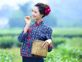 建国时期描写种茶的诗歌《种茶歌》注释赏析_关于凤凰单丛的茶诗茶歌