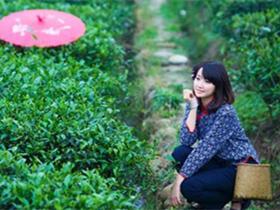 清代林鹤年茶诗《莲洞茶歌》赏析_描写安溪名茶的古诗_关于茶的诗句