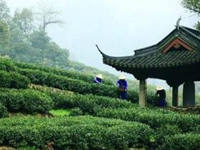 明代陈绛茶诗《辨物小志》赏析_描写四川蒙顶山茶有关茶的诗句