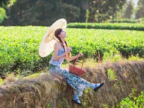 明代诗人林大钦关于品茶悠闲诗句《斋居》赏析_描写潮州凤凰单丛的茶诗