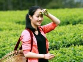 关于茉莉花茶的品茶诗句集锦_描写茉莉花茶的茶文化唯美诗句