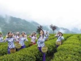 安吉白茶的茶诗+茶歌+茶联大全_赞美安吉白茶的品茶诗句20首赏析