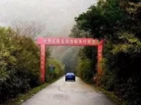 桐木关正山小种春茶悄然上市_小种红茶烂石生,与君相逢谷雨时。