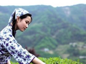 【组图】描写少女采茶的诗句《铁观音采茶歌》_关于春天采茶的精美茶诗