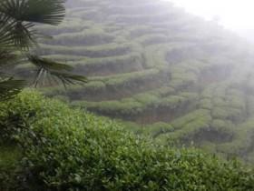 赞美铁观音茶园春天的茶诗妙句《安溪的秋》赏析_关于铁观音春茶的诗句