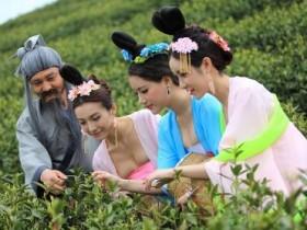 关于采茶的诗句《碧螺春》赏析_清代梁同书描写艳茶和口唇采茶的诗句