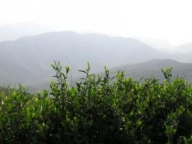 唐代诗人皮日休《茶中杂咏·茶人》注释/翻译/赏析_关于描写采茶的诗句古诗