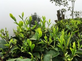 唐代诗人陆龟蒙《奉和袭美茶具十咏·茶坞》注释/翻译/赏析_关于茶园的诗句