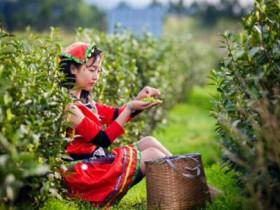 历代关于潮州茶文化的诗词大全_描写凤凰单丛的茶诗_有关潮州工夫茶的古诗