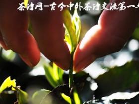 赞美普洱茶的现代诗《普洱茶抒怀》赏析_描写品茶与人生的心境茶诗