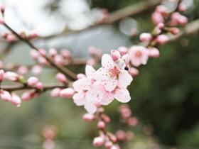 清代描写普洱茶的相关著作《蛮书》赏析_关于普洱茶文化的历史文献
