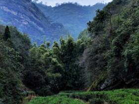 广东清远地区描写种茶、采茶的诗句《将进茶》注释赏析_关于茶园的诗句