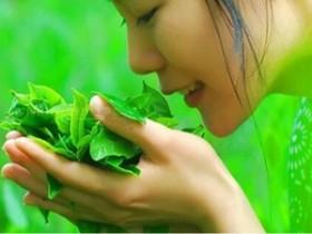 元代赞美武夷茶文化的茶诗妙句《咏贡茶》赏析_描写采摘新茶的古诗