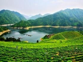精美茶叶对联《品茗》注释赏析_关于广东乌龙茶凤凰单丛的茶诗茶联