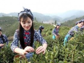 历代关于苏州茶文化的诗句精选_赞美碧螺春的茶诗大全_茶诗妙句茶联