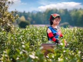 历代赞美都匀茶文化的古诗大全_关于都匀毛尖的茶诗_都匀毛尖品茶的诗句