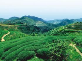 清代林鹤年的经典茶诗《山僮》赏析_描写古代童仆煮茶的诗句妙语