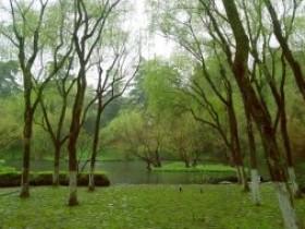 赞美西湖龙井茶的《七律·龙井》赏析