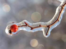 关于立冬的古今茶诗词妙句