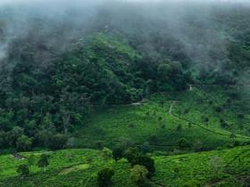 赞美安徽名优绿茶的茶联《太平猴魁群芳最,六安瓜片翠翅惊》赏析