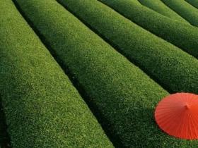 2021第一季度茶叶知识高清视频讲解课程(精编完整版)