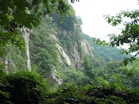花果山云雾茶多少钱一斤