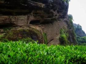 东方六禾武夷岩茶山场说:母树大红袍原生地九龙窠的耀世传奇